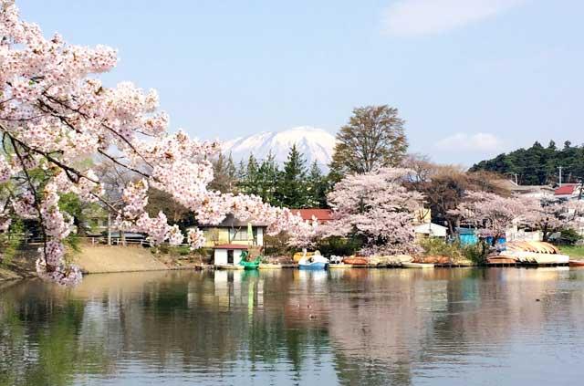 高松の池の桜と岩手山