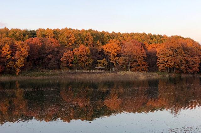 四十四田ダムの遊歩道から見た紅葉