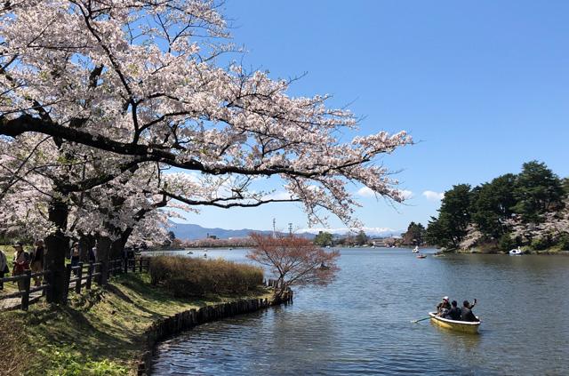 高松の池と桜